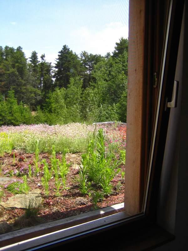 Toit v g tal la toiture cologique et isolante for Maison avec toit vegetal