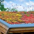 Construire une toiture végétalisée : coût et devis