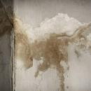 Contrer la condensation et les moisissures à l'intérieur de votre habitat