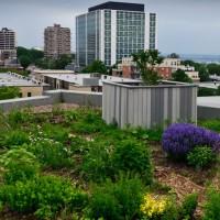Toit végétal : la toiture écologique et isolante