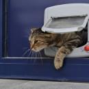 Installer une chatière sur porte