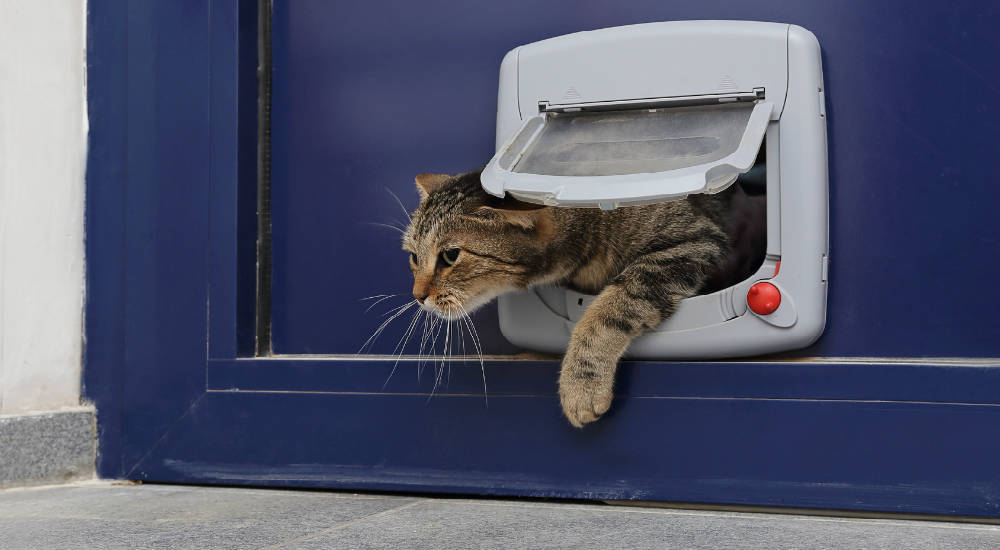 Installer une chati re sur porte - Chatiere pour chat ...