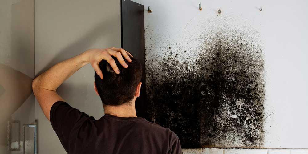 prix dun diagnostic humidit - Probleme D Humidite Appartement