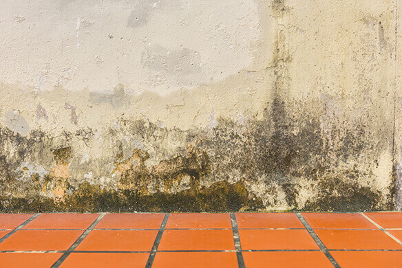 traitement humidit mur trendy amazing peinture antihumidit luxens blanc l leroy merlin ud. Black Bedroom Furniture Sets. Home Design Ideas