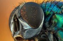 Faire fuir les mouches : méthode pour lutter contre les nids de mouche