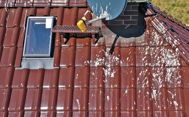 problème fientes pigeons toiture