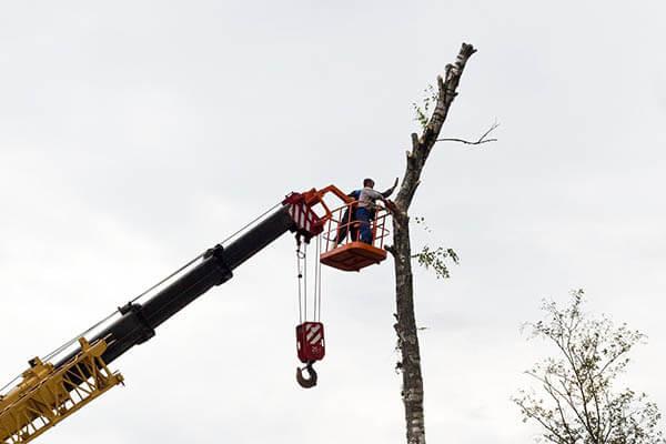 abattage arbre haut nacelle