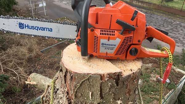 coupe arbre tronconneuse