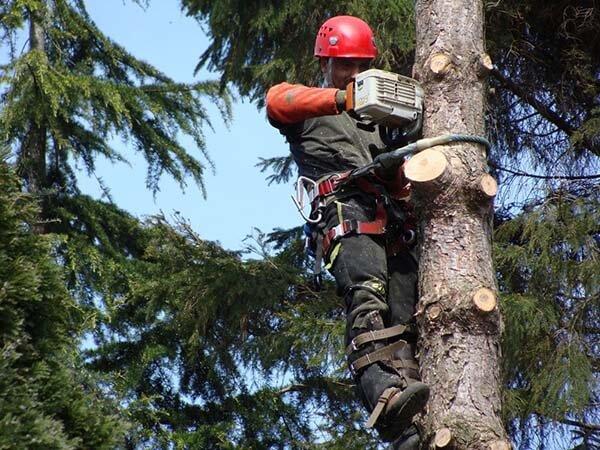 decouper arbre par haut