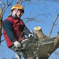 Prix d'un élagage d'arbres