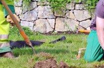 Tarif horaire d'un jardinier à domicile