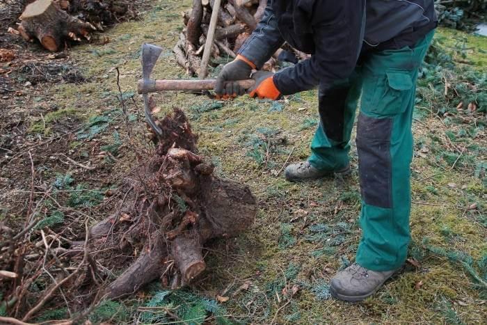 tarif elagueur arbres